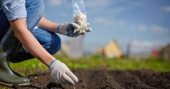 ISMEA: agevolazioni per l'insediamento di giovani in agricoltura