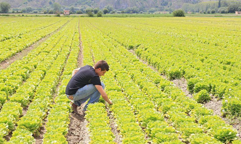 Bando per progetti Garanzia Giovani e Servizio Civile per 1000 posti nel settore dell'agricoltura